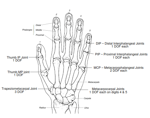 whole hand input  dissertation by david joel sturman m s