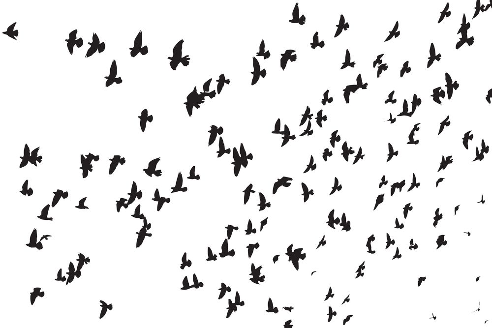 Pin By Aubrey Jonsson On Lp Moodboard Birds Flying Birds Black Bird Birds in sky desktop wallpapers free