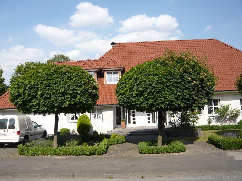 acer platanoides 39 globosum 39 kugel ahorn sehr h ufiger kugelbaum in deutschen g rten auch in. Black Bedroom Furniture Sets. Home Design Ideas