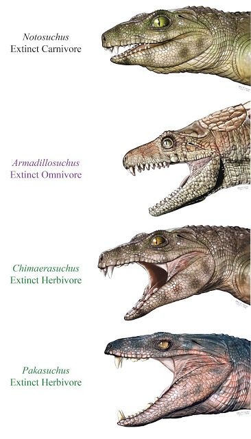 Some extinct crocs were vegetarians #prehistoricanimals