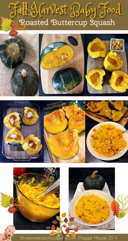Fall Harvest Baby Food Buttercup Squash With Images Baby Food Recipes Buttercup Squash Wholesome Baby Food