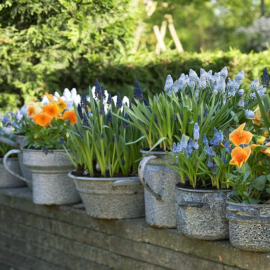 Driven By Décor: Galvanized Metal Tubs, Buckets, & Pails as Planters.  Some lovely planter ideas on this blog.