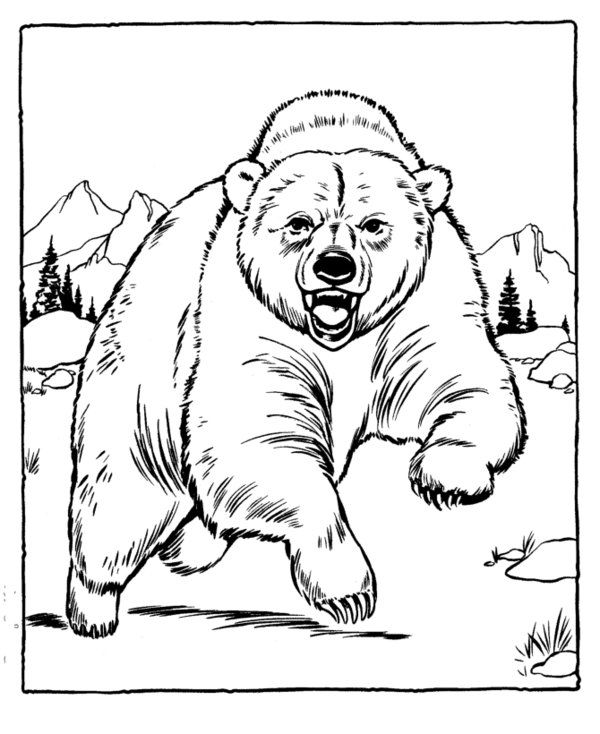 Grizzly Bear Coloring Page Bears Pinterest Zoos Bears and Animal
