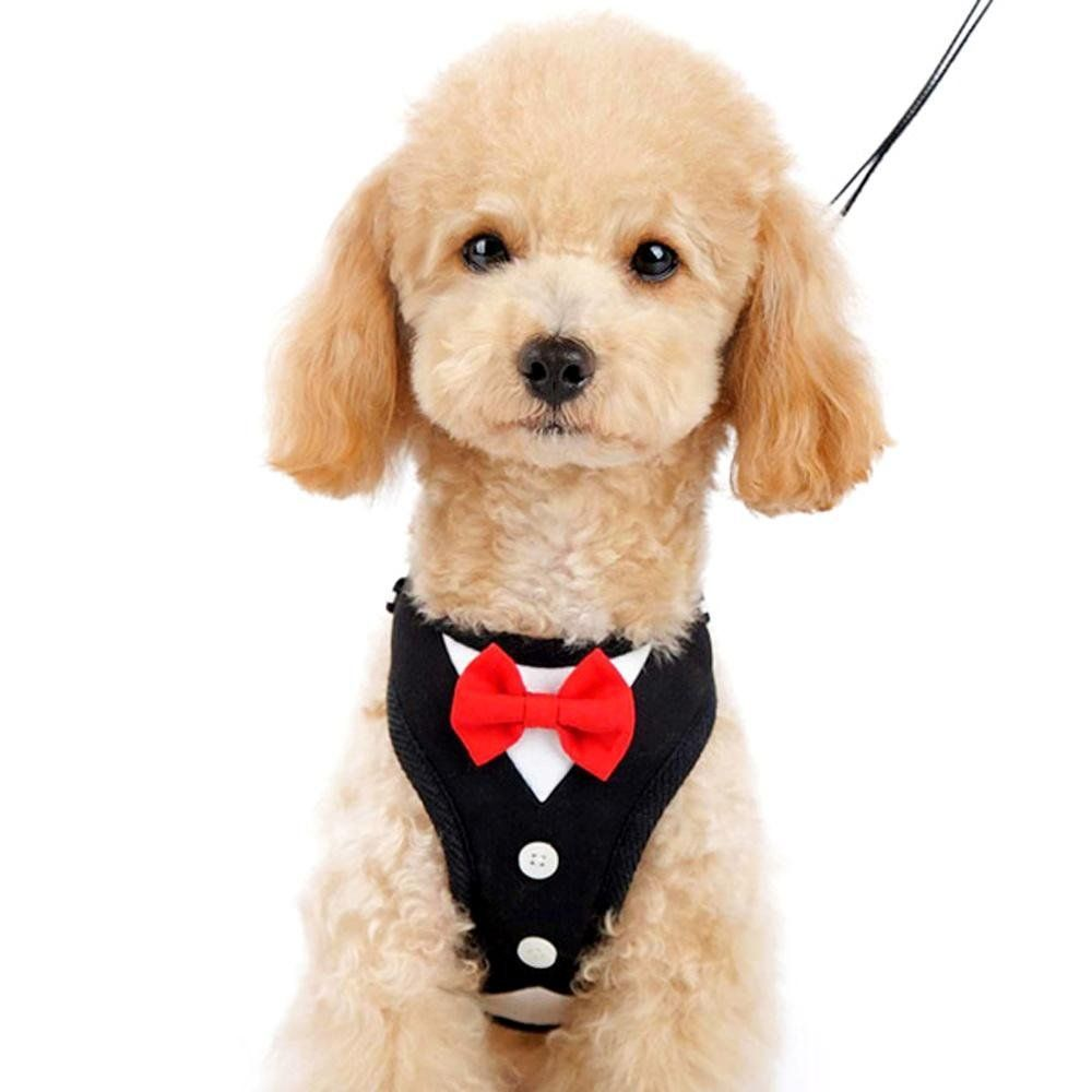 Easygo Red Bowtie Tuxedo Dog Harness With Leash Hurry Check