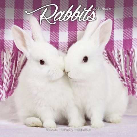 2019 rabbits calendar enjoy the images of domesticated on office wall colors 2021 id=12759