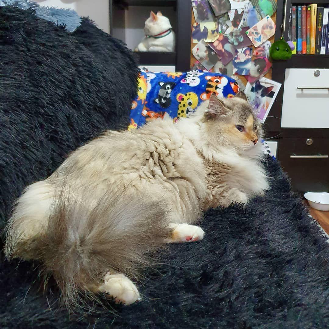 0 Finance Car Cat Toys N Cat Store Cat Pictures Cat Dem 2 Cats Talking Cat 5e Cable I Cato Sicarius Meo Tự Kỷ