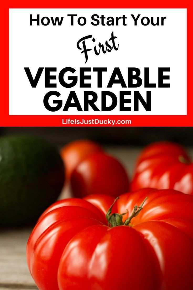 19 Tips For The First Time Gardener. How To Start Your First Vegetable  Garden. Grow Veggies In Your Own Backyard This Spring And Summer. Check Out  U2026