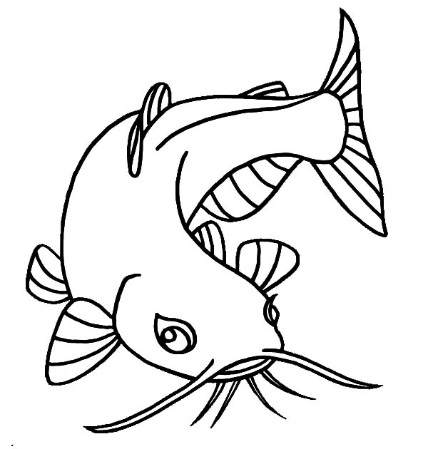 Catfish With Beuatiful Eyes Coloring Pages Best Place To Color Coloring Pages Art Drawings Simple Drawings