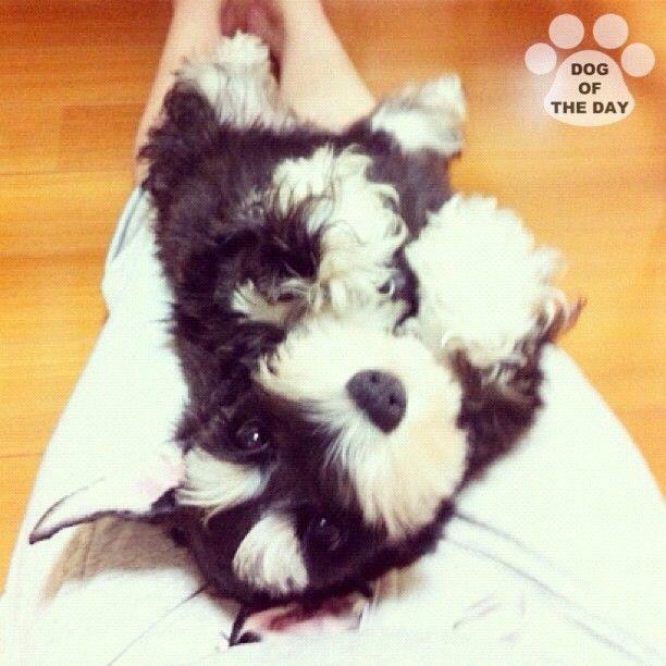 """DOG OF THE DAY  @liptan Jun.05,2012"