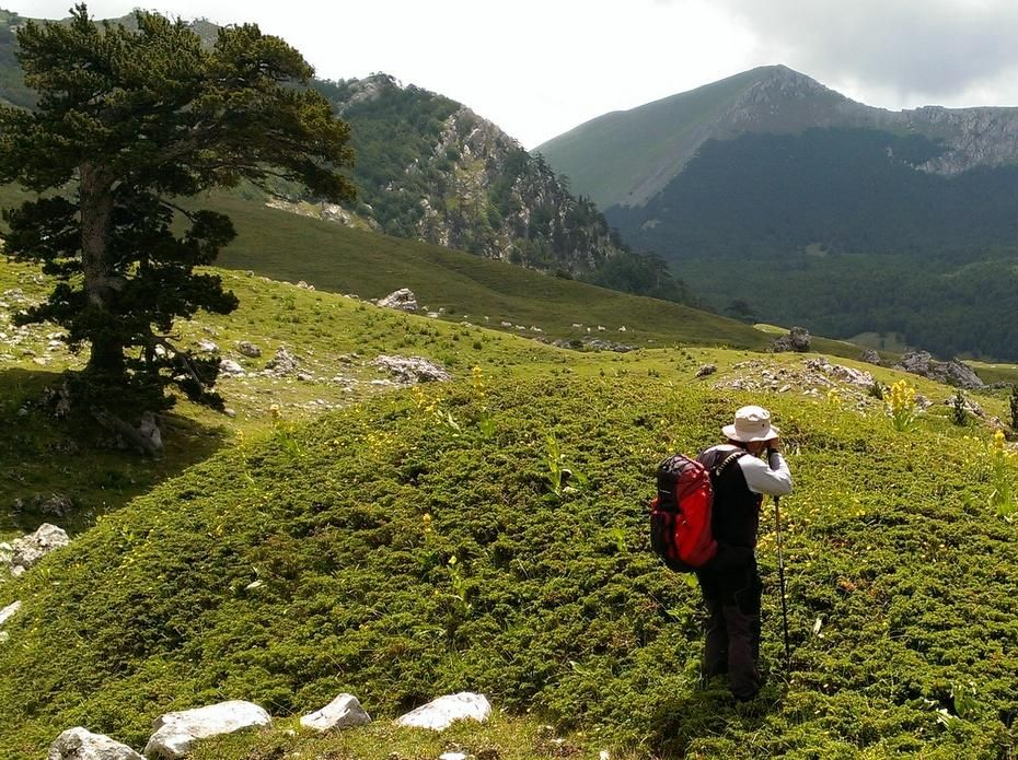 Hiking in Southern Italy wild flowers in the Pollino