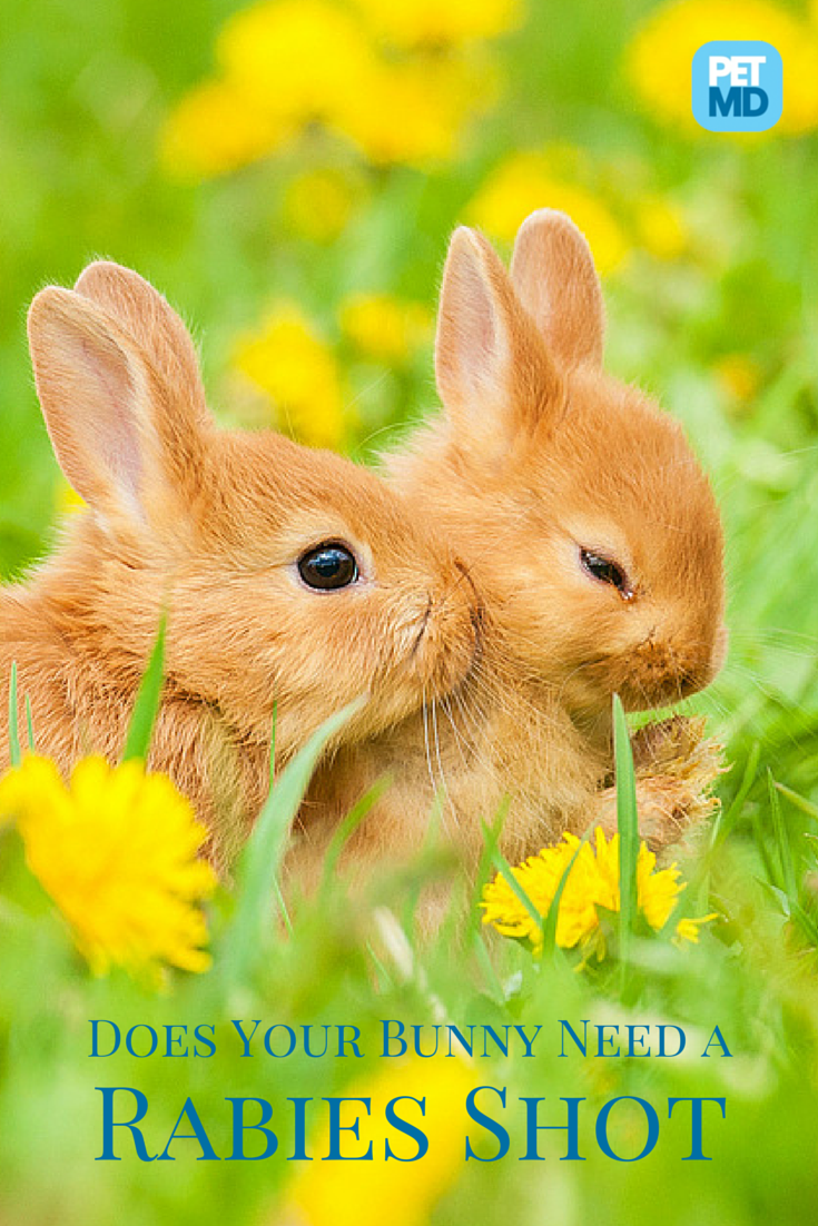 Did You Adopt A Cute Bunny For Easter Make Sure One Of Your First Visits Is To The Vet To Get His Rabies Shots Here S Why It S So Animals Pets Animals