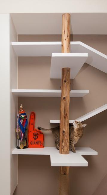 Attractive Wall Shelves, Pet Furniture Design Idea To Please Cats
