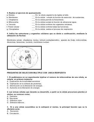 Evaluacion # 1 La Celula | proyecto Ciencias naturales | Pinterest ...