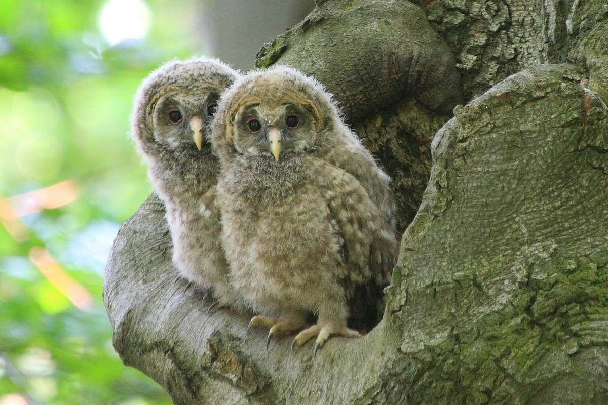 122 lokalít pralesov na našom území potrebuje ochranu, aby ostali v srdci Európy aj naďalej.