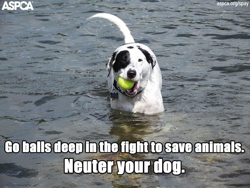 It S National Spay Neuter Month Share One Of Our Awesome Memes Spay Save Animals Animals