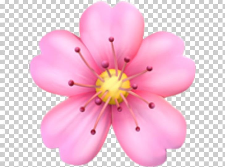 Emojipedia Flower Emoji Domain PNG apple color emoji