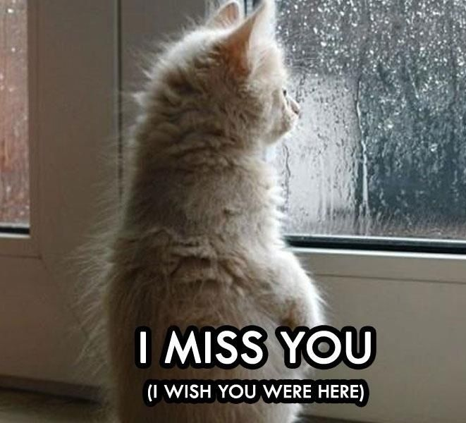 I Miss You Cat | miss you kitty cat | I Miss You | Pinterest