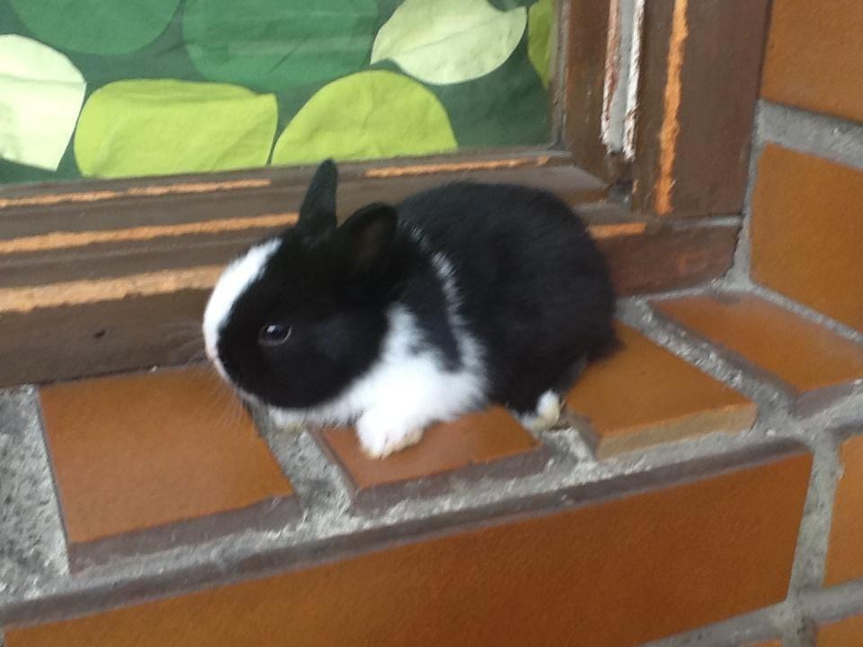 Pin En Conejos Rabbits