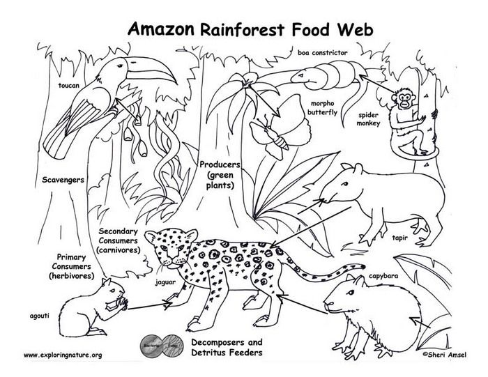 Image By Tori Mason On Science In 2020 Rainforest Food Web