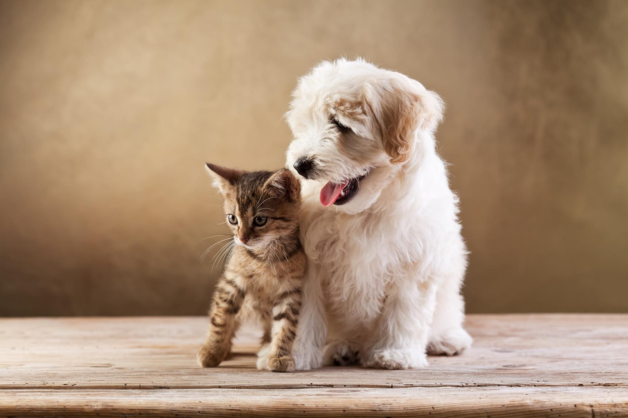 Cute Puppies And Kittens Wallpaper 52 Pictures Cute Cats And