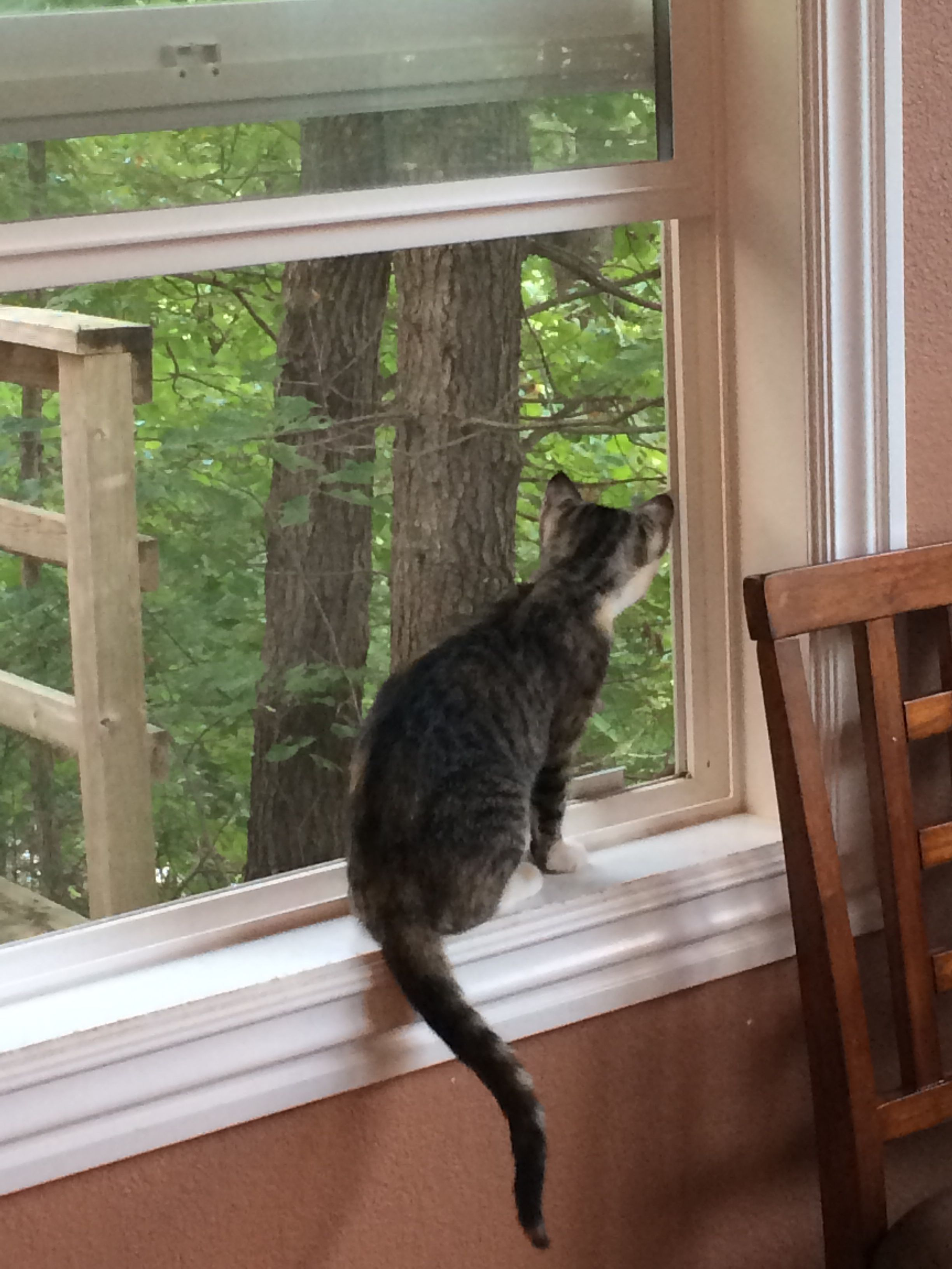 Window bed for cats  noticing the open window for the first time  kitties  pinterest