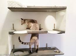 Resultado de imagen para cats furniture