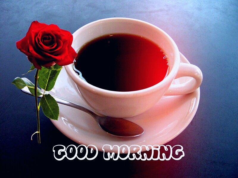Good Morning Coffee Red Rose Good Morning Good Morning Good