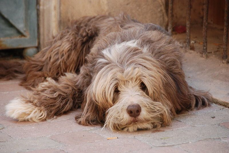 Top 200 Male Spanish Dog Names in 2020 Dog names, Pet