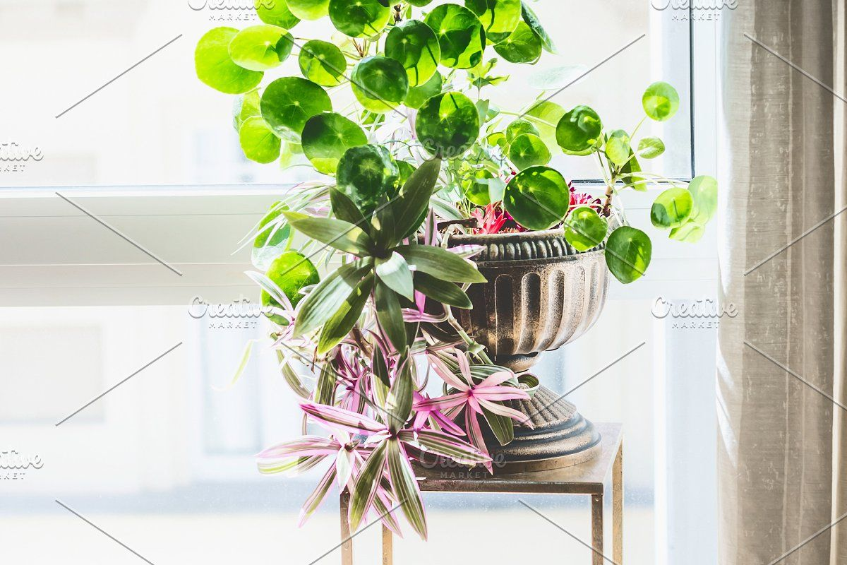 Photo of Green Indoor plants in pots and vase #Sponsored , #PAID, #pots#vase#white#Green