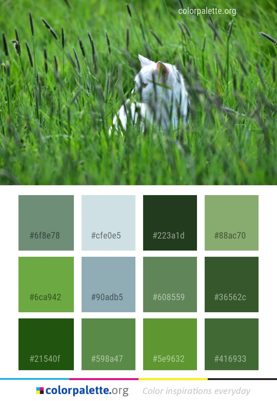 Grass Green Family Color Palette Colors Inspiration Graphics Design Inspiration Beautiful Colorpalette Palett Color Palette Family Coloring Green Grass