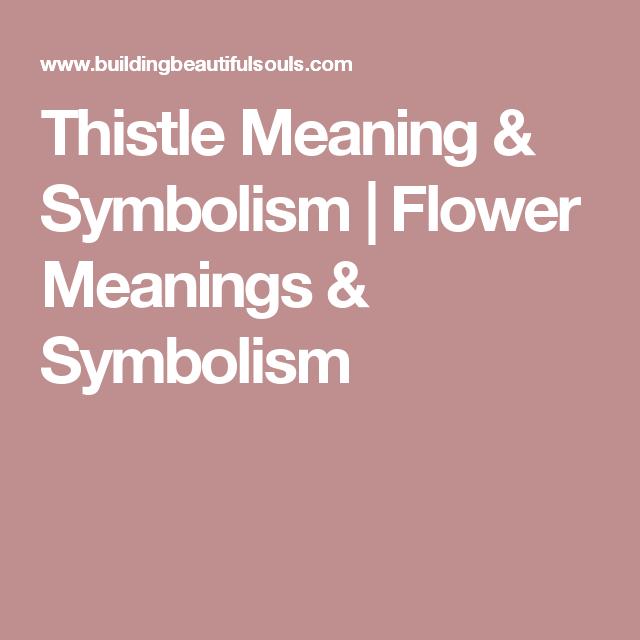 Thistle Meaning Symbolism Gardenlandscaping Pinterest