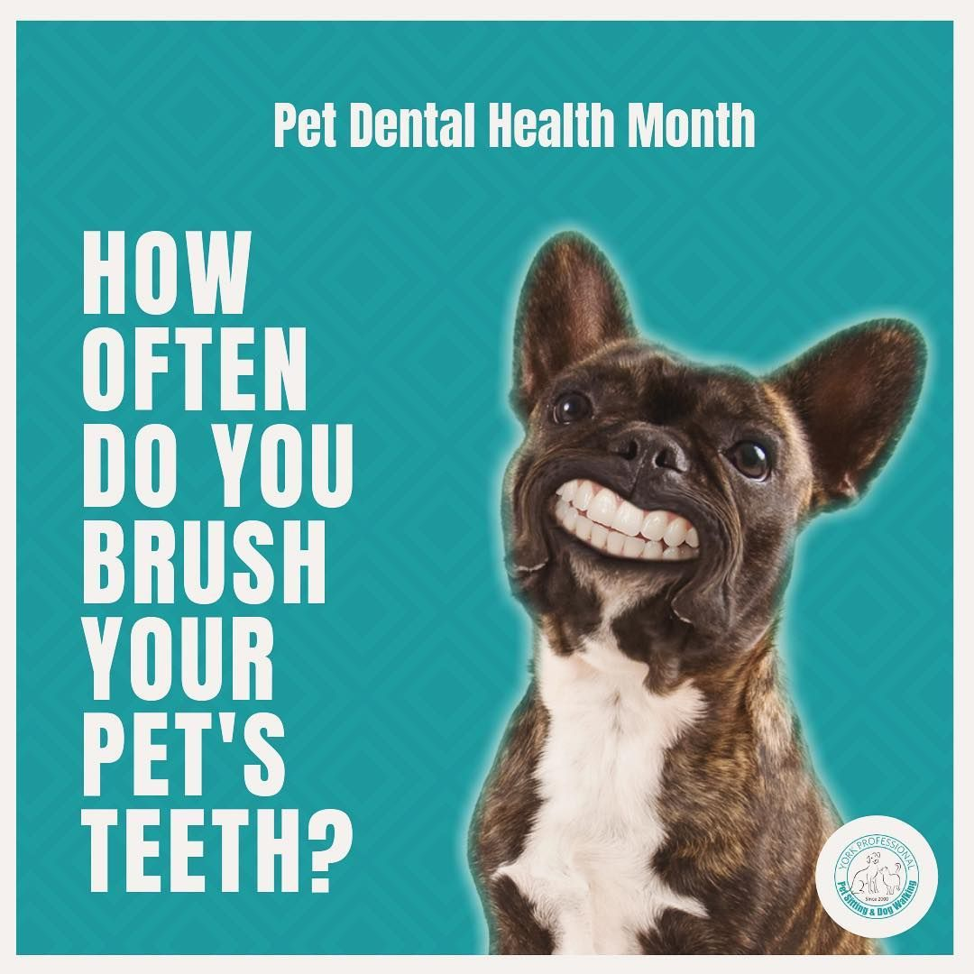 Its Pet Dental Health Month How Often Do You Brush Your Pets