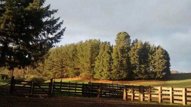 Campo ,region de la Araucania...Chile