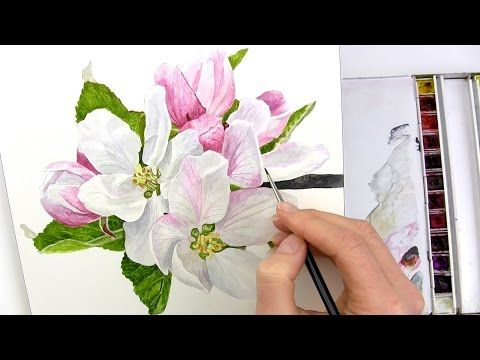 b4accdc97 How to paint realistic apple blossom in watercolour with Anna Mason -  YouTube