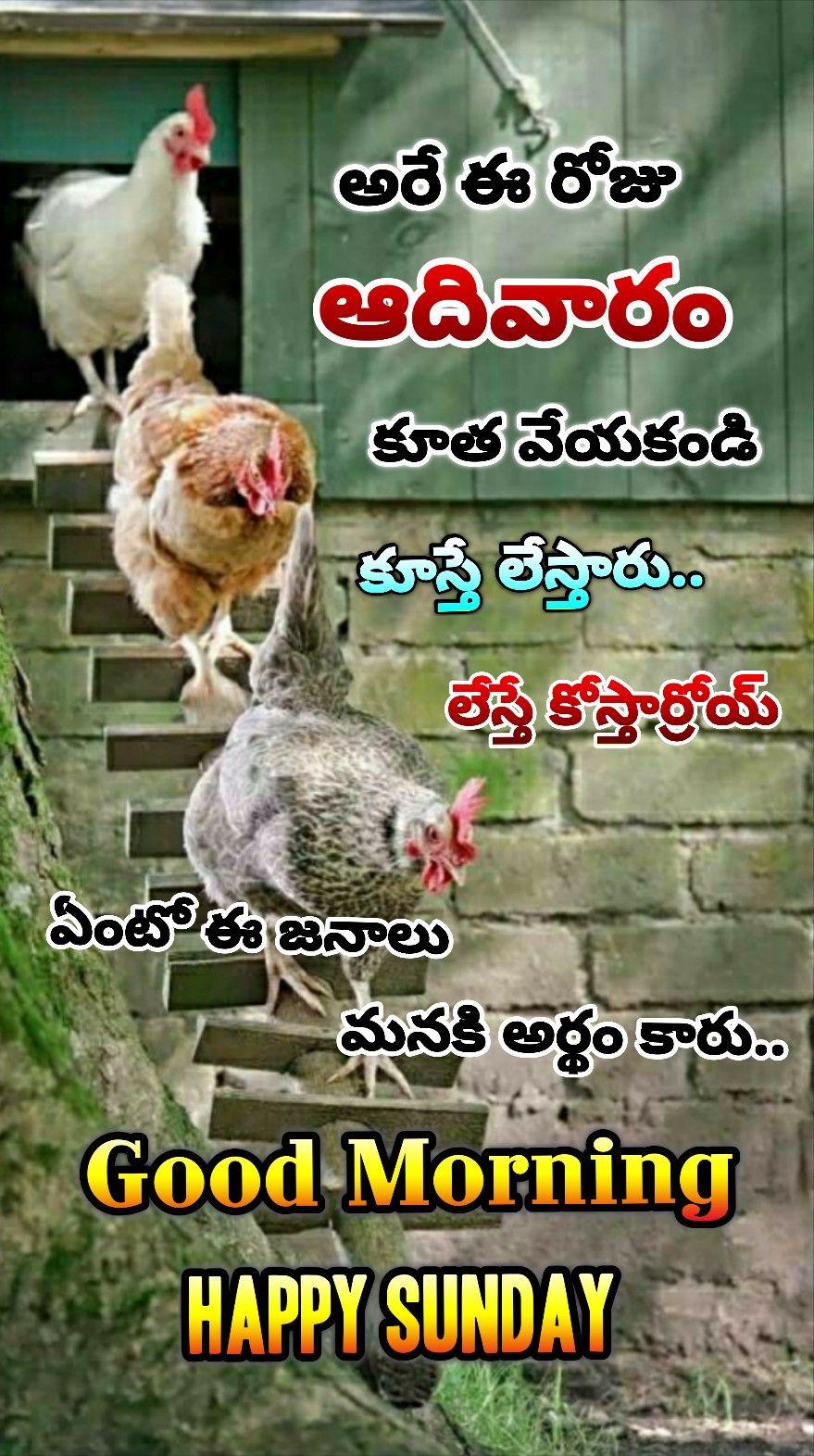 Pin By Sirikonda Rakesh On Quotes Good Morning Happy Sunday Good Morning Happy Happy Sunday