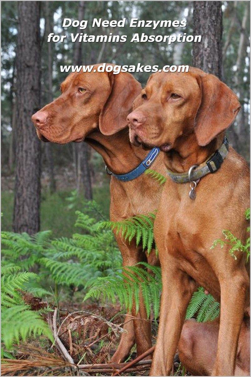 Organic Dog Food Prolong Dog S Lifespan Check Out The Image By