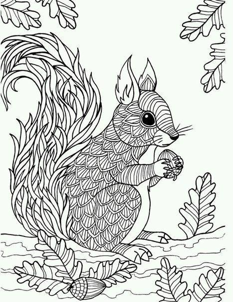 pin von barbara auf coloring rodent  malvorlagen tiere