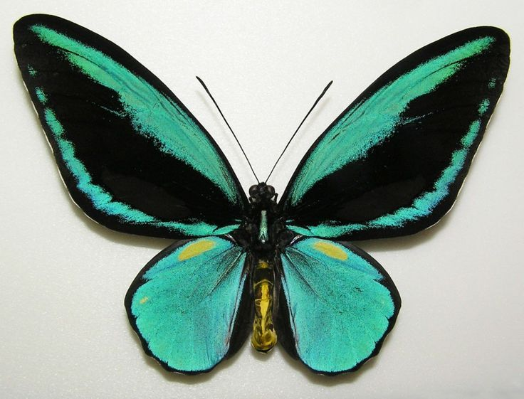 Real Life Butterfly Pictures Real Life | Real life,...