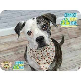 Adopted Lady South Florida Animal Rescue Network Inc Miami