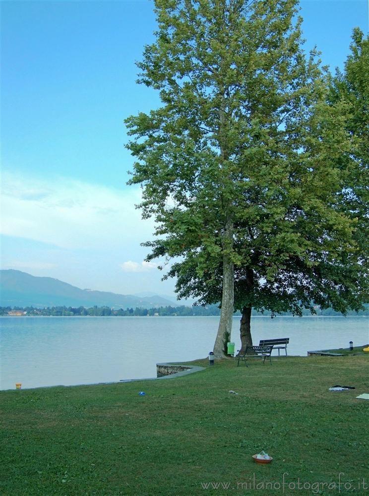 Cadrezzate (Varese, Italy) - Tree before Lake Monate