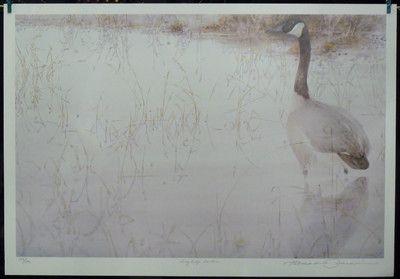$95.00 Animal Wildlife Goose -- Grey Lodge Gander by Thomas Quinn Art Print