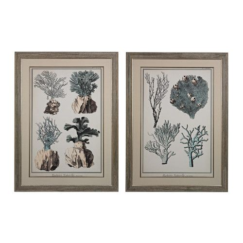 Found it at Wayfair - Oversized Coral Species 2 Piece Framed Graphic Art Set