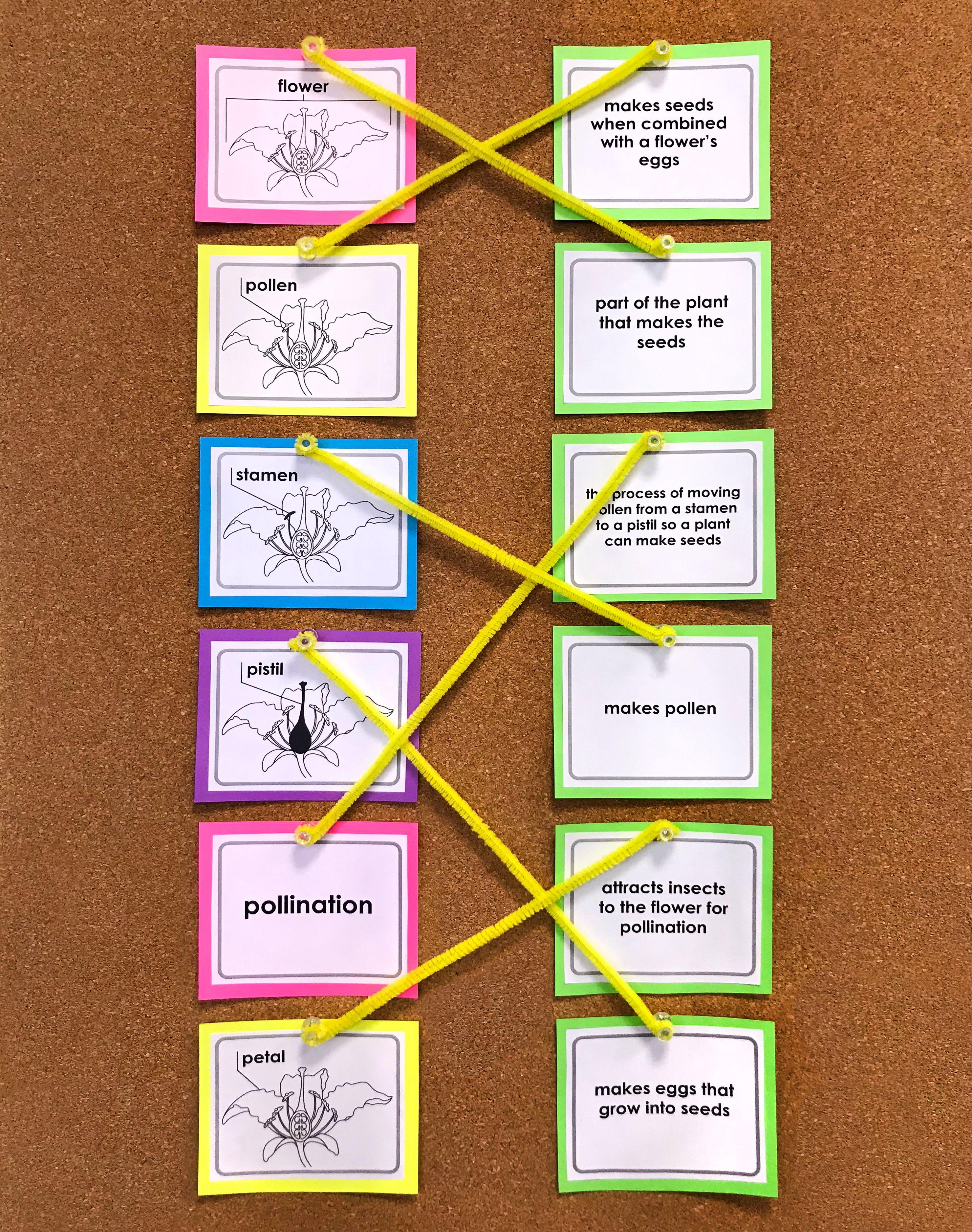 Plant A Flower Day Plants Worksheets Super Teacher Worksheets Primary School Activities [ 3751 x 2961 Pixel ]