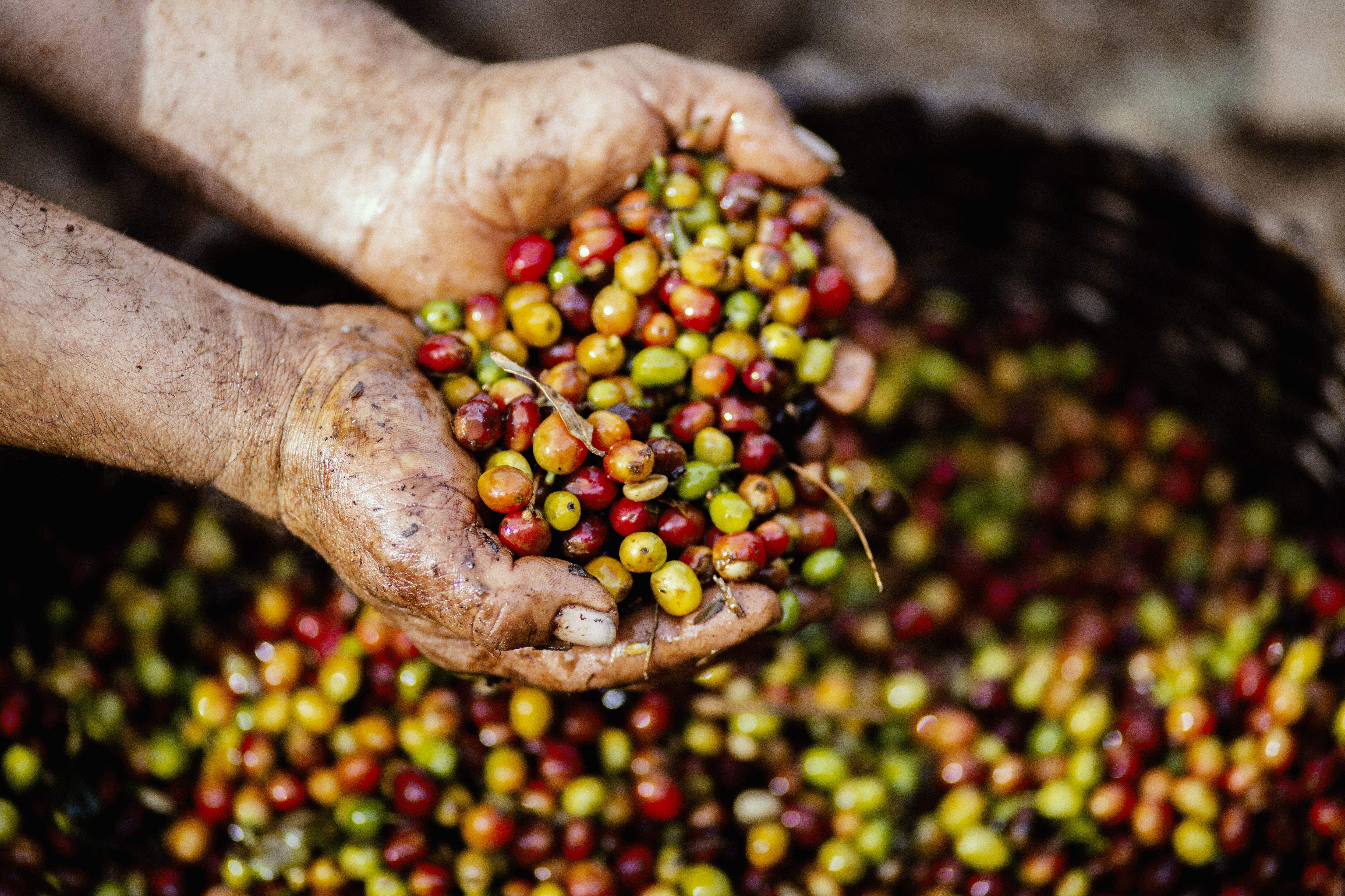 Colombian coffee in 2020 types of coffee beans benefits