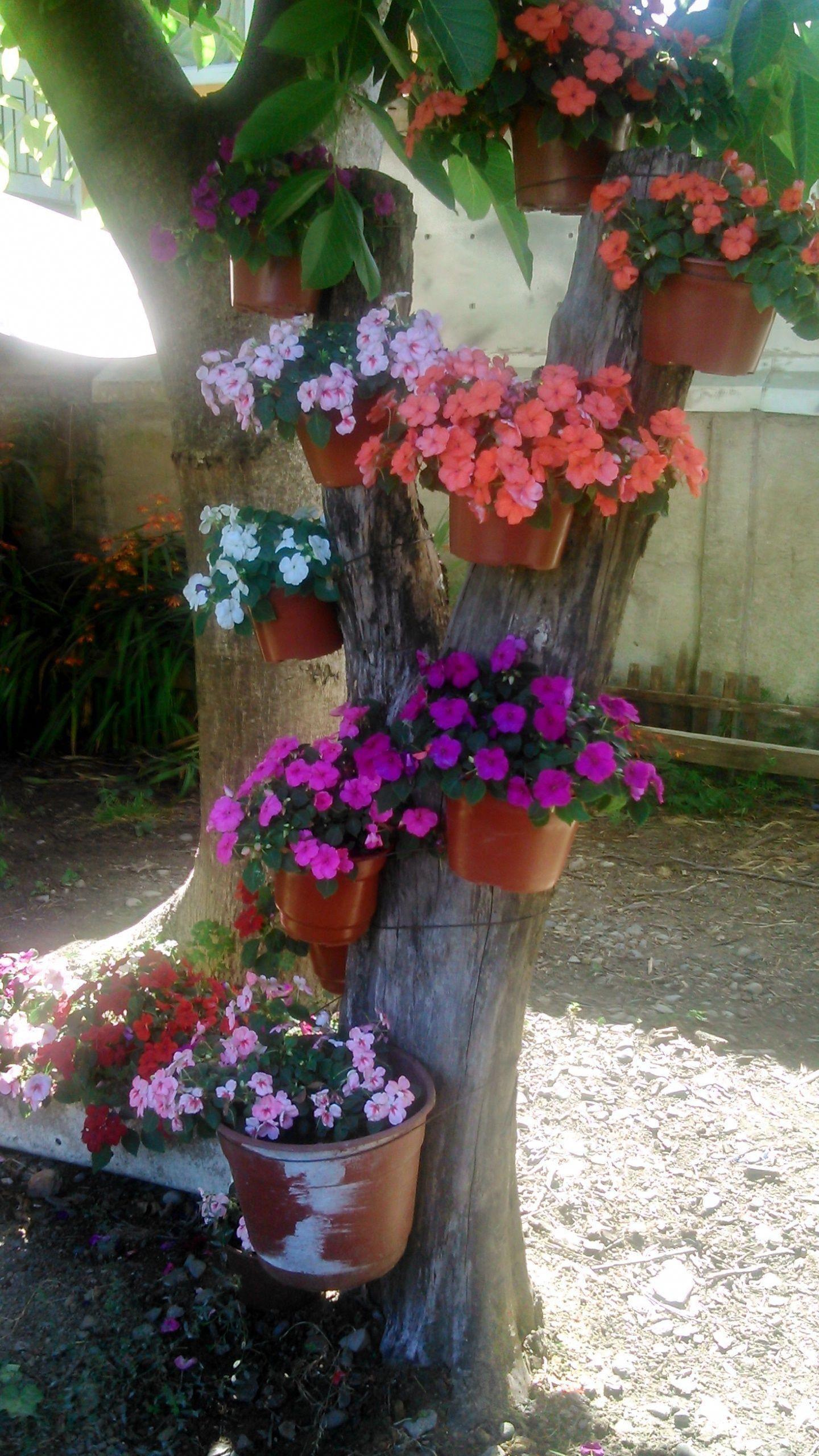 flower garden basic guide floweringplants backyard on most beautiful backyard landscaping ideas id=61393