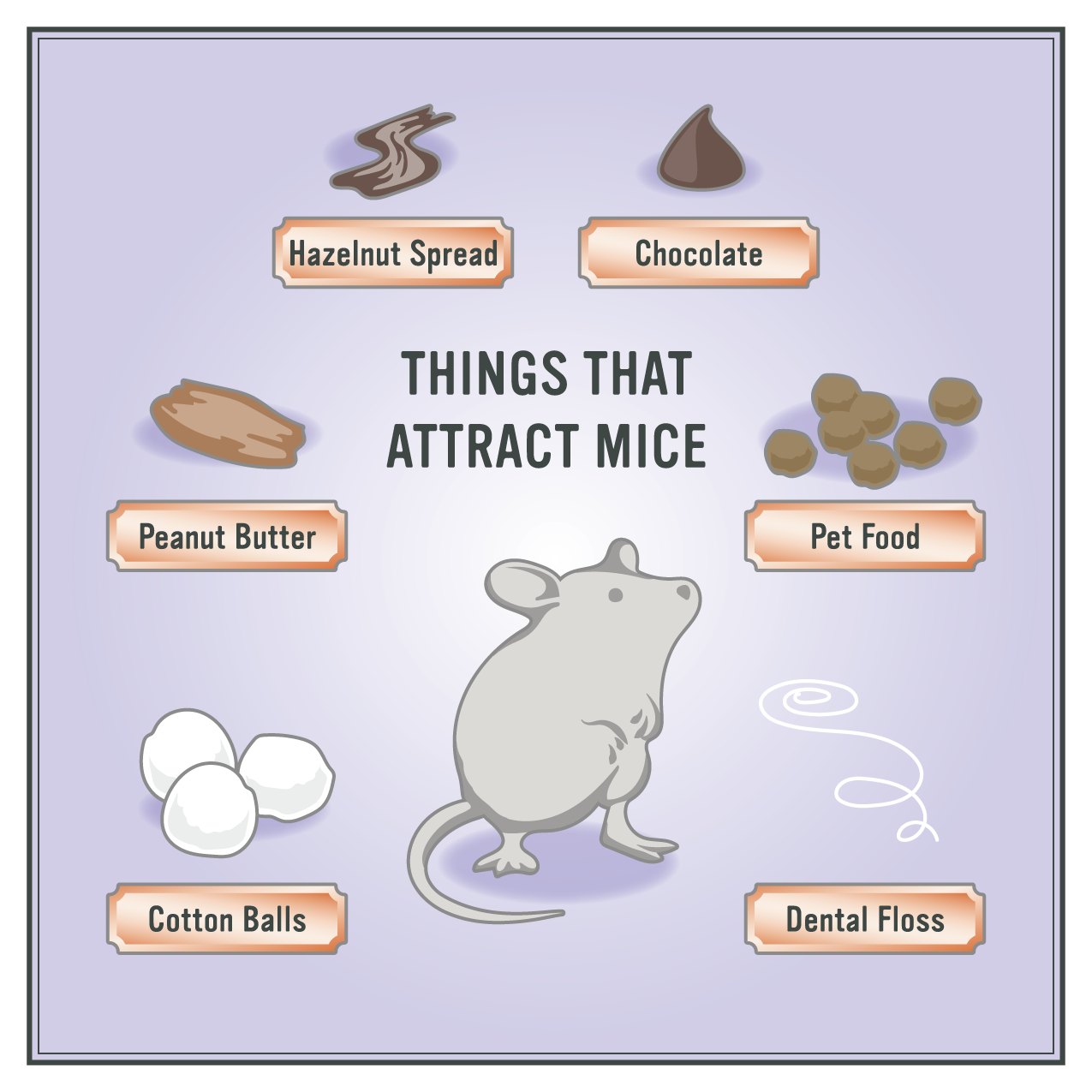 How To Get Rid Of Mice In 5 Easy Steps Getting Rid Of