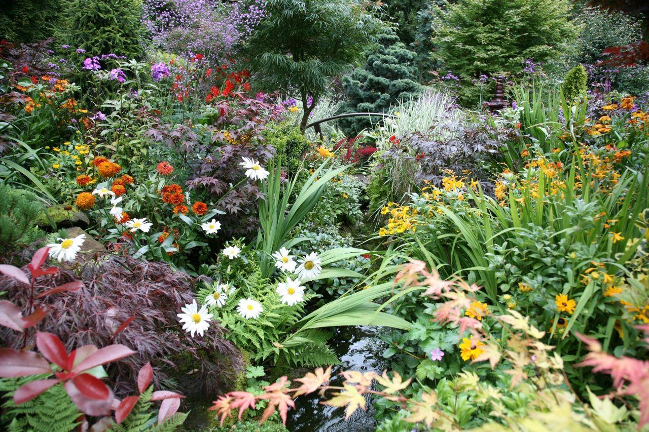 Perennial Flowers Beautiful Bulbs Perennials Flower Bulb