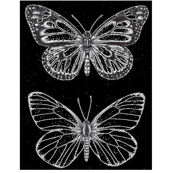 Butterfly Temporary Tattoo Muscheltatowierungen Inspirierende Tattoos Tatowierungen