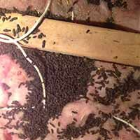 Attic Cleaning Services In Rhode Island Ri Rodent Dropping Removal Rhode Island Cleaning Cleaning Service