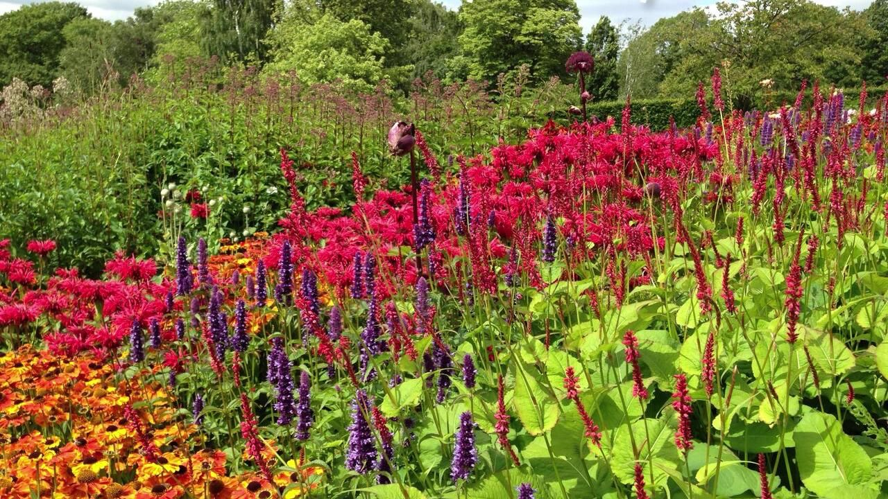 Photo of Our Best 10 Suggestions To Add That WOW Factor To Your Summer Flower Beds And Borders!